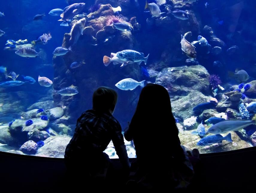 Kids at aquarium