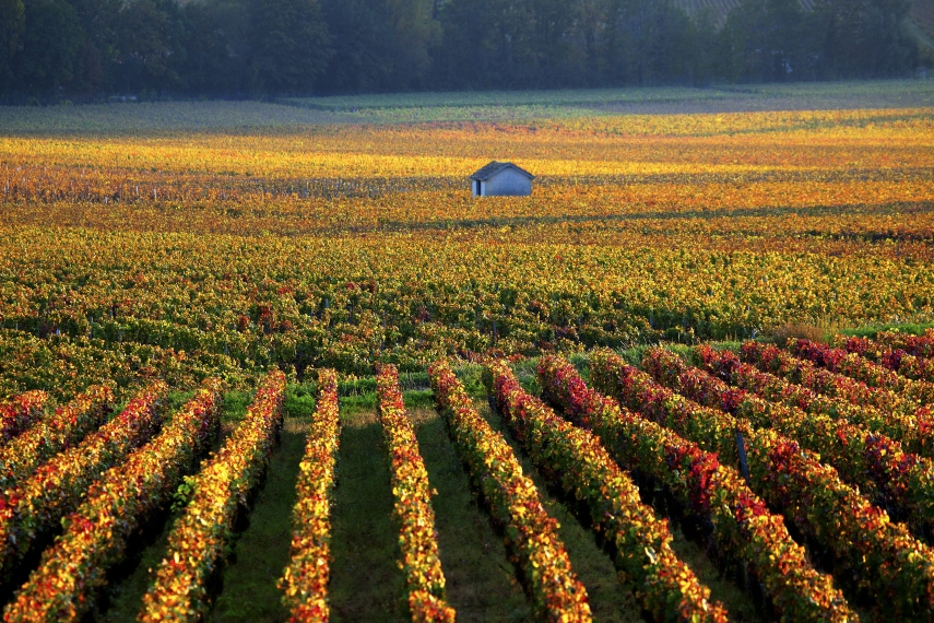 Vineyards at Beaune