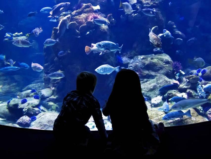 Kids-at-aquarium